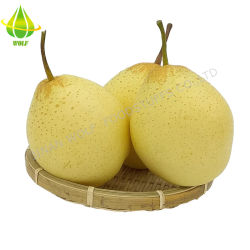 20/22/24 사이즈 4.5kg / CTN 포장 신선한 Ya Pear 도매