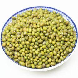 Großhandel Premium Agrokultur Bio Getrocknete Mungbohne Sprossen Munggrün