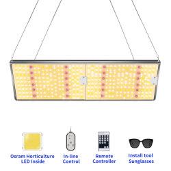 ضوء بيان LED صغير الحجم للفلورسنت معلق 6500 ألف باللون الفلوريسنت