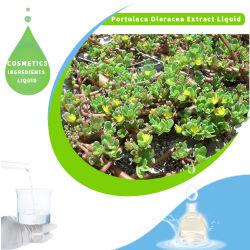 고품질 허브 추출 포탈라카 올리acea 피부 관리를 위한 액체 추출