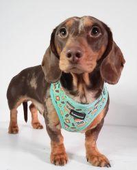 Tutti i tipi di set completi maglia traspirante cane imbracatura