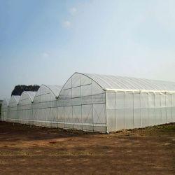 زهرة ميني البلاستيك مكافحة الأشعة فوق البنفسجية سعر الدفيئة والأعشاب / الخضار / النباتات