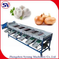 Obstverarbeitung-Maschinerie-Pinsel, der das Sortieren trocknend sich wäscht, Maschinen-Zeile einwachsend