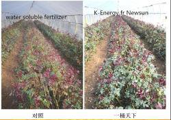 K-Energia liquida NPK del fertilizzante