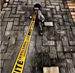 方法は飼い犬の馬具の鎖に文字を入れた引き起こされた白いドッグカラーの鎖が1.5m犬猫のナイロン鉛の鎖調節可能な犬の馬具をセットした