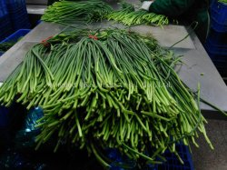 Het Chinese Knoflook van uitstekende kwaliteit van de Spruiten van het Knoflook van de Uitvoer Standaard Verse