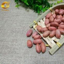 Neues Getreide beste Qualtiy rohe Erdnuss-Kerne