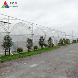 토마토를 위해 Hydroponic를 가진 농업 광고 방송 또는 농장 산업 또는 정원 또는 야채 플라스틱 다중 경간 필름 많은 온실 또는 오이 또는 고추 또는 Eco 대중음식점