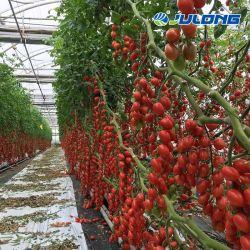 Venlo 폴리탄산염 온실을 증가하는 턴키 토마토 딸기 수경법 시스템