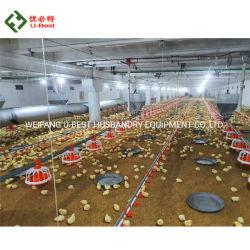 معدات تربية الدواجن مع آلية دجاج مزرعة رضاعة نظام سعر وحدة تغذية الغلاية