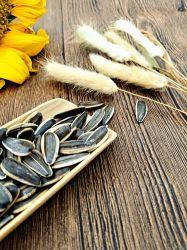 China Girassol 363 361 Novo cultivo de alimentos orgânicos Fabricação