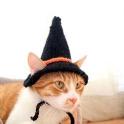 Het Huisdier van de Hoed van de kat haakt de Huisdieren van de Hoed breit de Kat van Toebehoren met de Hoed Esg16268 van het Kostuum van de Riem van de Kin van de Heks