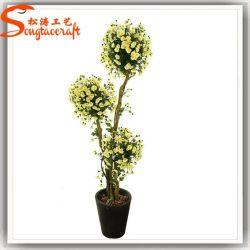 Особый дизайн вечнозеленых растений бонсай дерево
