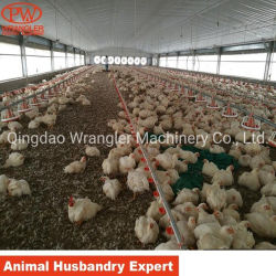 أتمّت دواجن [هووسنغ بروجكت] تجاريّة دجاجة تجهيز أرض يتوالد تجهيز