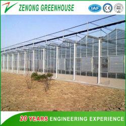 Multi agrícolas abarcan el vidrio flotado Casa Verde para el tomate y pepino ensalada//Pepper