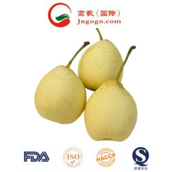 La nouvelle récolte Ya frais poire Fruits frais pour l'exportation