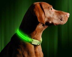 De LEIDENE Navulbare Halsband USB - Beschikbaar in 6 Kleuren & 6 Grootte - maakt Uw Hond Zichtbaar, Veilig & Gezien
