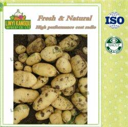 Shandong Origen de la patata de alta calidad para la exportación