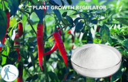 Regulador de extrato de planta Pó branco Pgr Kintin