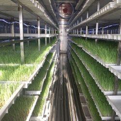 Башня Гидропонная аэропоника животное кормовых контейнер Гидропонные семена для Продажа