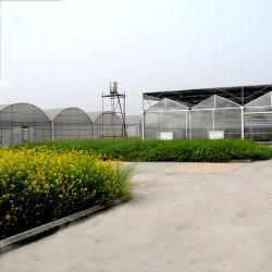 Commerciale scegliere/serra Anti-UV di plastica della pellicola portata di Muti grande per il fiore