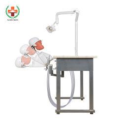 SY-Ym07 Fast Delivery Simulatore dentale Medical Training Phantom Head