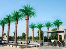 Immergrüne Glas-künstliche Dattel-Palme der Faser-20f für Dekoration