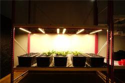 Samsung Hydrofarm 500W UVled wachsen Lichter