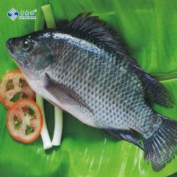 Niloticus de fruits de mer de poissons congelés ensemble Tilapia rond noir
