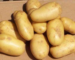 黄色いポテト