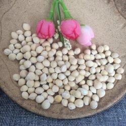GAI Guo Кальций Фруктовые семена для посадки