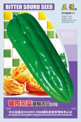Cq-HybrideOil-Skinbittere Melone (162)