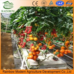 زراعة عالية الجودة الطماطم/الخيار/بيبر جرينهاوس مع أنظمة الهيدرولوجيا