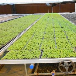 Estrutura em liga de alumínio foco crescente cama de semeadura de bancada para efeito de estufa agrícola