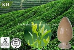 "Kingherbs"" 100% натуральные экстракт зеленого чая/Camellia Sinensis Extract"
