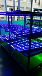IP65 blaue LED Wand-Unterlegscheibe 24W mit Blendschutzdeckel