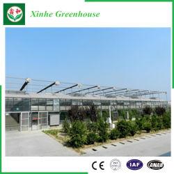 야채 꽃을%s Venlo 유형 유리제 녹색 집