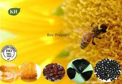 Abeille Propolis, Bee colle, Bee Extrait de propolis, extrait de propolis purifiée