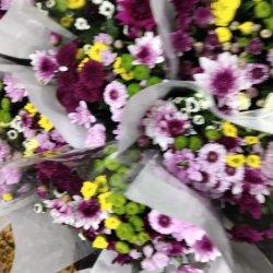 L'embellir les fleurs pour la vente en gros et de détail de fleurs coupées fraîches Chrysanthemum Mélange de couleur pour la décoration