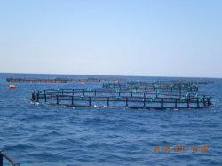 HDPE 원형 송어 그물은 튜니지아 농장을 감금한다