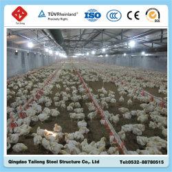 Prefabbricato struttura in acciaio Shade Pollo Poultry House