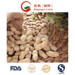 シェルで良質の新鮮な中国のピーナッツを輸出します