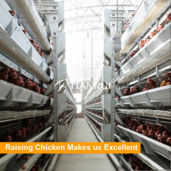 Automático de galvanizado de jaulas en batería de la capa de huevo de granja avícola avicultura Equipo para la gallina ponedora