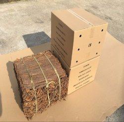 新しい穀物の25kgカートンで全優秀な品質のカシア桂皮