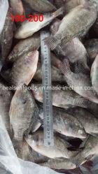 卸し売り魚の100-200gによってフリーズされる黒いイズミダイ