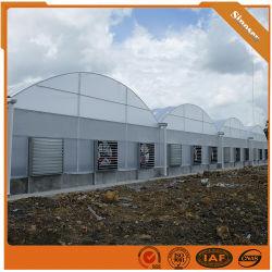 Faible coût commercial serre avec tunnel de film plastique de culture hydroponique de