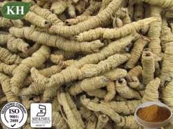 Natural Medicinal Indianmulberry extrait 3%Nystose UV