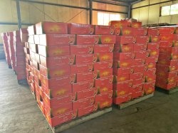 Sachet de pâte de tomate assaisonnements avec image de marque OEM