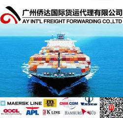 Морские грузовые перевозки / океана Экспедитор оператора из Китая в Карибском бассейне