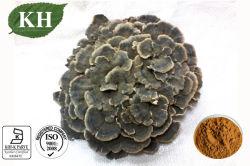 Extrait d'alimentation Fabricant Coriolus champignon Polysaccharides 20%-30%